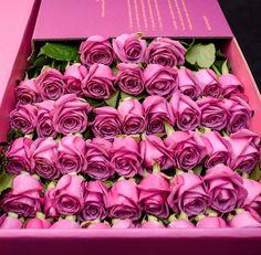 floweralia:  Flower-love. Blog.