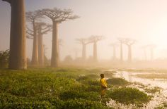 Mãe Da Floresta, Madagascar. National Geographic.