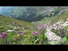 Wandelen in het Gental in Zwitserland - YouTube