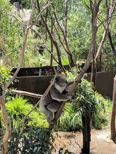 Australia, Bear, Animals, Animales, Animaux, Bears, Animal, Animais
