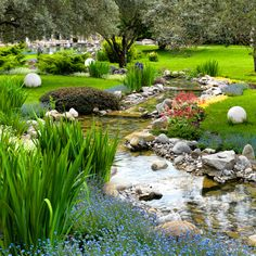 Natural, Sprawling Garden with Stream Water Feature