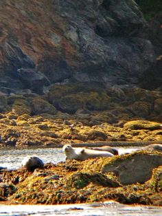 Seals in Kachemak Bay, Homer, Alaska.