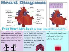 Heart Mini Book @ Tina's Dynamic Homeschool Plus