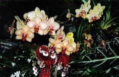 most beautiful orchids