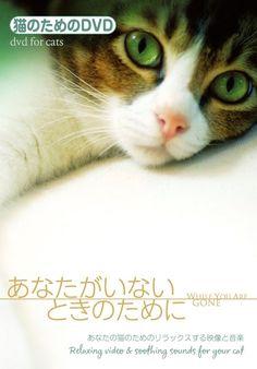 Amazon.co.jp | ネコのためのDVD/あなたがいないときのために あなたの猫のためのリラックスする映像と音楽 DVD・ブルーレイ - アメリカの猫ちゃんたち