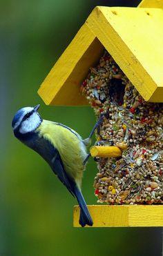 Seitdem das Wiederverwenden und die DIY Projekte umweltbewusst und hoch modern wirken, ermutigen wir immer mehr Leute solche... Futterhäuschen für Vögel