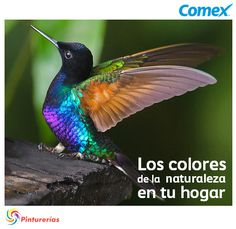 Pinta tu vida de los colores del canto del colibrí. #IluminaTuMundo #InspiraciónComex