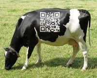 qr code+cow