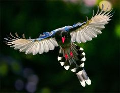 If you have to be a magpie, be a colorful one.
