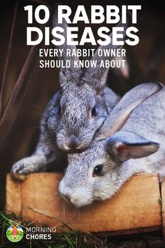 If you're a new rabbit owner, as pet or meat source, first you need to know all the common rabbit diseases and how to treat them. Here's the list. 10 Common Rabbit Diseases, Illnesses, & Ailments (and How to Treat Them) MIMI🦄🌈😜 How 2 c All About Rabbits, Raising Rabbits For Meat, Caring For Rabbits, Bunny Cages, Rabbit Cages, Bunny Rabbits, Cages For Rabbits, Lionhead Bunnies, Free Rabbits