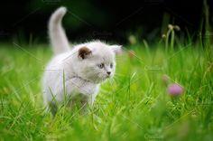 """Cat by byrdyak on @creativemarket"" © Creative Market (quote) Picture via creativemarket.com"