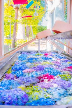 Most Beautiful Flowers, Beautiful World, Japanese Landscape, Summer Travel, Pretty Pictures, Wallpaper, Hydrangea, Travel Photos, Scenery