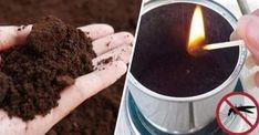 Débarrassez-vous des moustiques facilement grâce au marc de café - Trucs et Astuces - Trucs et Bricolages