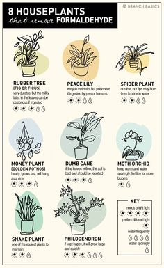 8 NASA-Approved Plants That Remove Formaldehyde by Branch Basics Branch Basics is Currently Loving: 8 Houseplants that Remove Formaldehyde and how to care for them and filter chemicals and toxins out of your air. Indoor Garden, Garden Plants, Indoor Plants, Ficus Tree Indoor, Water Plants, Vertikal Garden, Moth Orchid, Decoration Plante, Inside Plants