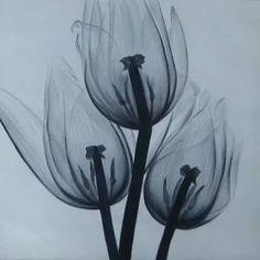 velký obraz, tulipány, květinový motiv, černobílá