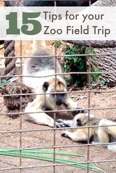 Must read if you are headed to the zoo - or really any field trip.