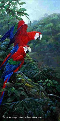 rainforest wildlife art - Google Search