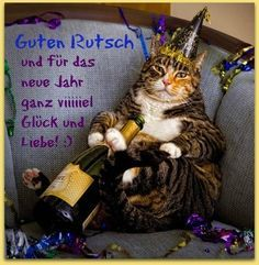 Happy New Year's Eve! So… was 2012 a good year for you? What do you expect out of I Love Cats, Crazy Cats, Cute Cats, Funny Cats, Funny Animals, Cute Animals, Funniest Animals, Happy New Year Funny, Happy New Years Eve