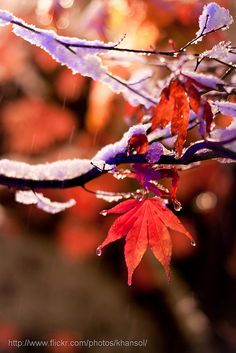 Orange, purple, and fluffy ice. (First Snow (Nov 20, 2010) by Hansol K)