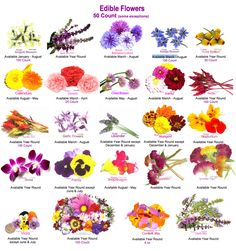 EDIBLE FLOWERS - FLORES COMESTIBLES - http://www.mayesh.com/Portals/0/Content/PDFs/Edible-Flowers-Product-Guide-2013.pdf