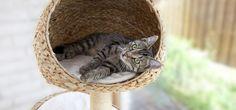 Idées arbre à chat - astuces