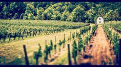 #winery #niagaraonthelake