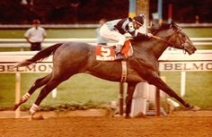 Spectacular Bid    Record 30: 26-2-1   Earnings $2,781,608   Major wins   Champagne Stakes (1978) Laurel Futurity (1978) Young America Stakes (1978) Hutcheson Stakes (1979) Florida Derby (1979) Strub Series (1980) San Fernando Stakes (1980) Santa Anita Handicap (1980) Mervyn Leroy Handicap (1980) Californian Stakes (1980) Washington Park Handicap (1980) Amory L. Haskell Handicap (1980) Woodward Stakes (1980) American Classic Race wins: Kentucky Derby (1979) Preakness Stakes (1979