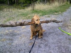 I Found a Stick