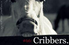 Equestrian Problem #66    CHIEF!!!! AHHHHH