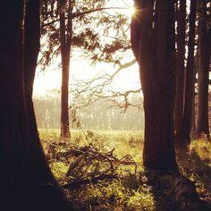 #sun #phoenixpark #pine #beautiful #instagood #picoftheday #dublin #ireland #nature #tree #park Nature Tree, Dublin Ireland, Adventure Travel, Pine, Plants, Beautiful, Instagram, Pine Tree, Planters