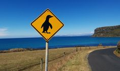 Penguin crossing at Stanley.
