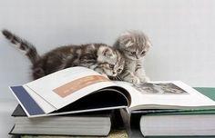 Reading)