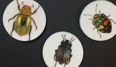gold scarab beetle brooch, insect brooch, beetle brooch set, bug brooch set, gyriosomus luczoti, pachycoris torridus, chrysina resplendens by redstitchlab on Etsy https://www.etsy.com/listing/262456391/gold-scarab-beetle-brooch-insect-brooch