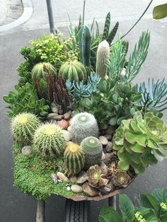 cactus and succulents garden - House Plants - succulents garden outdoor Mini Cactus Garden, Cactus House Plants, Garden Plants, Indoor Plants, Cactus Flower, Cactus Cactus, Succulents In Containers, Cacti And Succulents, Planting Succulents