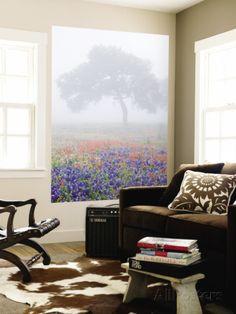 Field of Bluebonnets and Paintbrush on Foggy Morning, Texas, USA Muurposter van Julie Eggers - bij AllPosters.be
