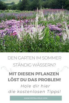 Die Sommer werden immer trockener und wir müssen uns mit unseren Pflanzen darauf einstellen, wenn wir die Freude am Garten nicht verlieren wollen. Deshalb habe ich hier die 12 passenden Pflanzen für dich zusammengestellt, mit denen du das ständige Wässern vergessen kannst. Die Pflanzen kommen aus Regionen, wo sie an Hitze und Trockenheit angepasst sind. Das sind – Nordamerikanische Prärien – blütenreiche Steppen und – mediterrane Landschaften. Hol dir hier meine Gratis Tipps. #petrapelz.de Cluster, Plants, Bee Friendly Plants, Farmhouse Garden, Lawn, Left Out, Back Stitch, Planting, Fruit And Veg