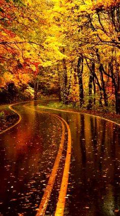 Autumn awe ~