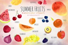 Summer Fruit Watercolor Clip-art by Maria B. Paints on Creative Market