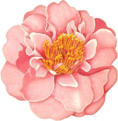 Melissa Shirley Designs | Hand Painted Needlepoint | Light Pink Camellia