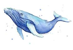 Humpback Whale Watercolor Print Whale Art Whale by OlechkaDesign