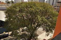 Designer gráfico Hugo Leonardo Peroni, que desde 2009 cuida de uma árvore localizada no bairro da Saúde, em São Paulo.