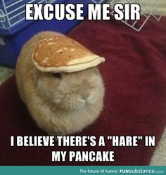 """Hare Humor:  Excuse me Sir… I believe there's a """"Hare"""" in my pancake."""
