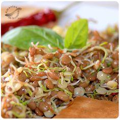 Los brotes de lentejas sin pelar tienen un alto contenido de proteínas y carbohidratos, lo que le da mucho valor nutritivo.