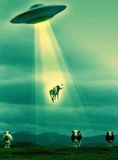 Disco voador levando vaca