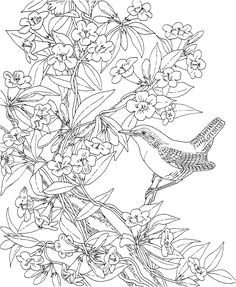 Free Printable Coloring PageSouth Carolina State Bird And Flower Wren
