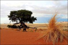 Namib-Naukluft National Park | Namib-Naukluft National Park, Namibia ... C