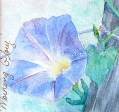 Morning Glory Blossom  Watercolor Giclee 5x5 by CheyAnneSexton