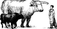 bull.jpg (300×154)
