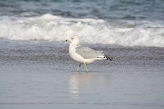 Delaware Beach, hot spot