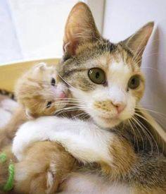 猫の親子 16|ねこLatte+